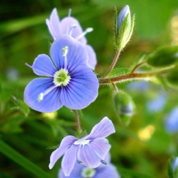 Цветные цветы. Синий и голубой.