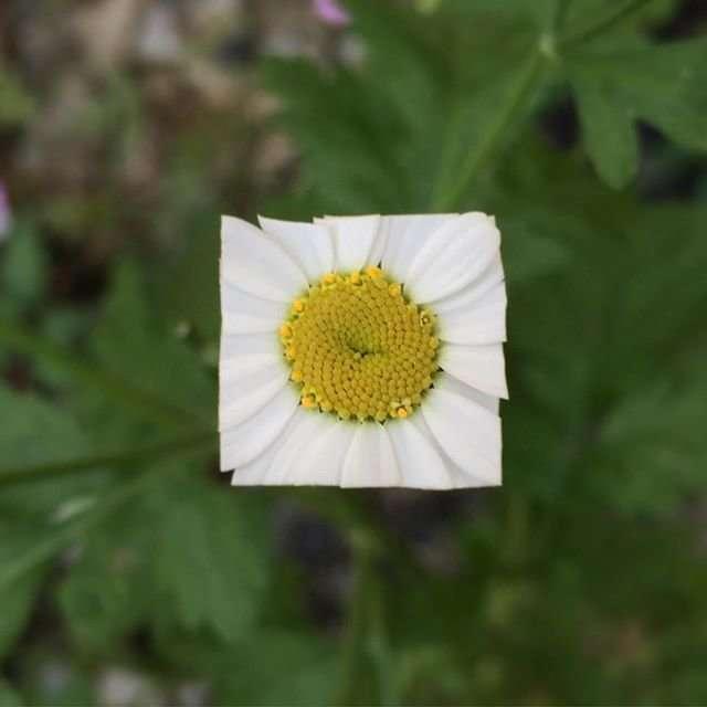 Квадратные цветы Баку Маеда