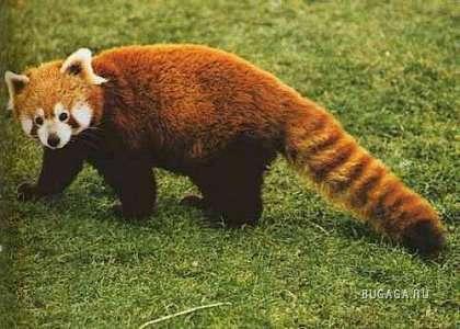 25 самых необычных животных в мире!