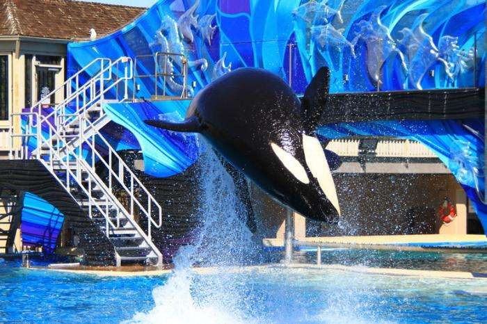 Sea World в Сан-Диего!