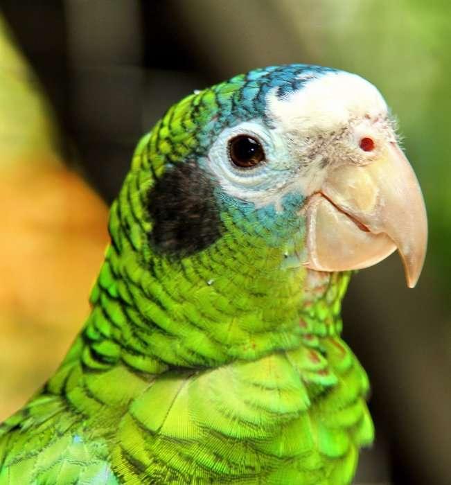 Доминикана - тропический рай в августе 2012!