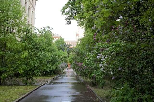 Сирень в Ботсаду МГУ